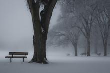 Hoar Frost Winter Park