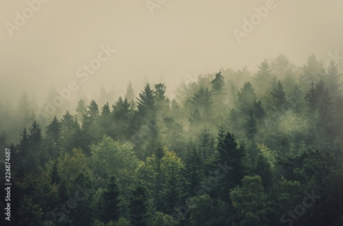 Poster Kaki Foggy Summer Forest