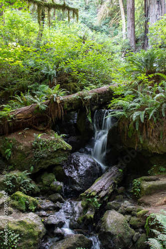 Aluminium Prints Garden Waterfall in the Redwood Forest