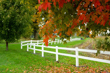 Autum Leaves Over Hanging A White Picket Fence