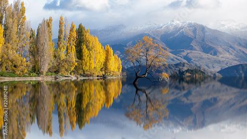 Foto op Plexiglas Bomen lone tree in lake wanaka on snow mountain at New Zealand