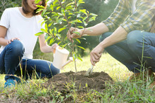 Young Man And Woman Plant A Tree
