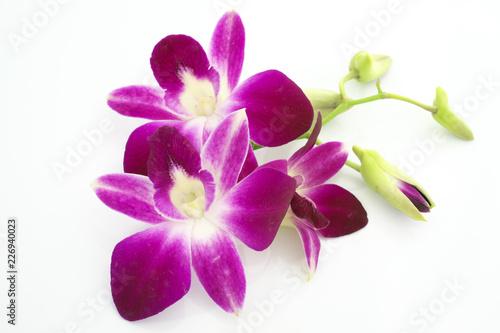 Cuadros en Lienzo Thai Orchid flowers