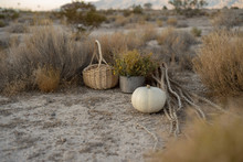 White Pumpkin In Autumn Desert...