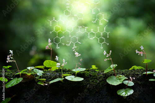 Fotografia  Plants background with biochemistry structure.
