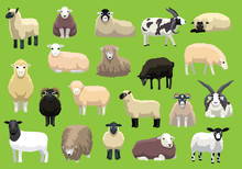 Various Sheep Breeds Poses Car...