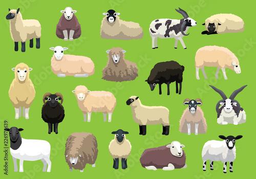 Fototapeta premium Różne rasy owiec pozuje kreskówek wektorów