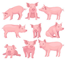 Vector Set Of Pigs In Different Poses. Cute Farm Animal With Pink Skin, Flat Snout, Hooves And Big Ears. Domestic Livestock