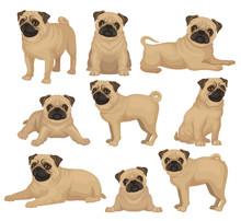 Flat Vector Set Of Pug Puppy I...