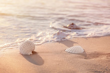 Sea Shells On Sandy Beach