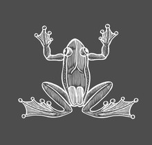 Vector Frog In Engraving