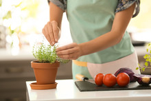 Woman Picking Fresh Thyme In Kitchen