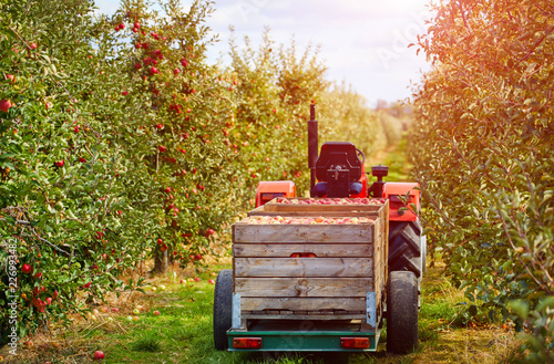 Foto Old tractor with trailer in the apple trees orchard