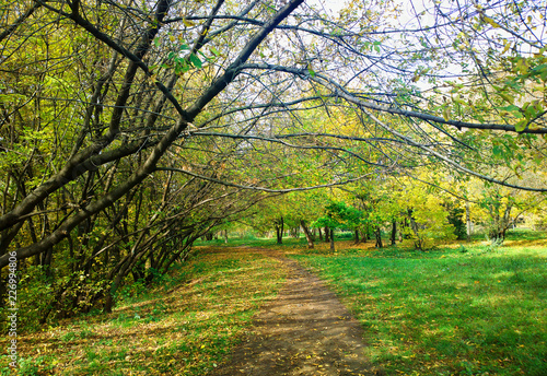 Poster Road in forest Autumn park with tilted trees landscape background