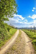 Winding Road In Green Vineyard Landscape