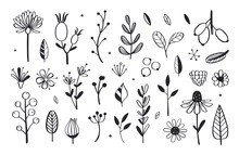 Herbal Tea And Floral Doodle Set. Vector 3