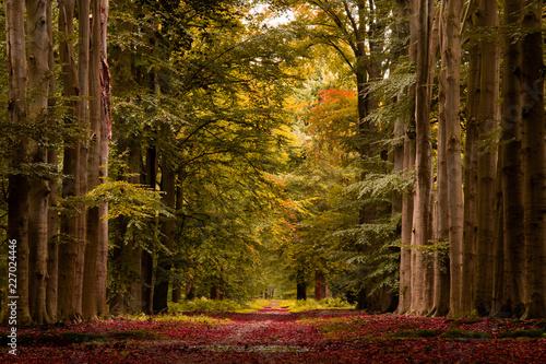 Garden Poster Natural Park autumn forest