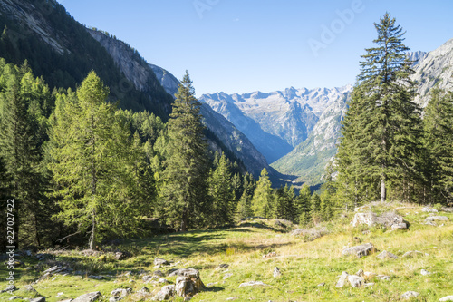Photo  Landscape of alpine valley with coniferous forests and rock faces