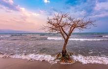 Burundi Bujumbura Lake Tanganyika, Windy Cloudy Sky And Sand Beach At Sea Lake In East Africa, Burundi Sunset With Dead Tree In The Sea