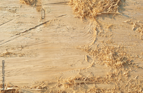 Fotografie, Obraz  Abstract Texture Pattern Background of Wood of Natural Tree