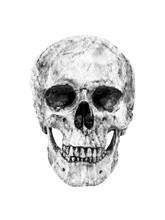 Black And White Human Skull Ha...