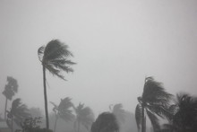 The Rain Storm Impact Coconut Tree With Gray Sky Background