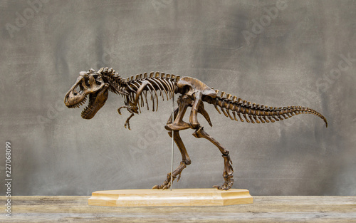 Foto  Fossil skeleton of Dinosaur king Tyrannosaurus Rex ( t-rex ) on wooden base and blackboard background