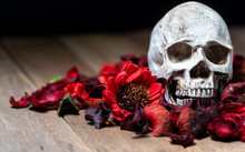 In Front Of Human Skull Placed On Red Dried Flowers On The Wooden Background.concept Of Death And Halloween