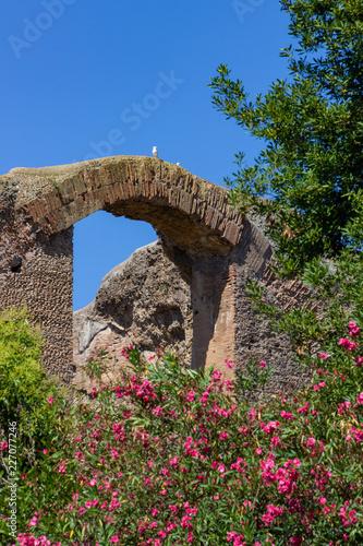 Fotografie, Obraz  Baths of Caracalla