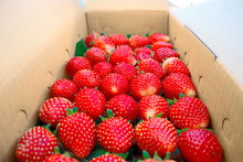 Strawberries Packed In Boxes.Fresh Strawberries From The Farm.