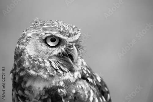 Keuken foto achterwand Uil owl, eyes, bird, fly, wall, decor