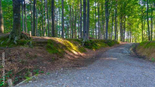 Ścieżka w lesie w słoneczny poranek