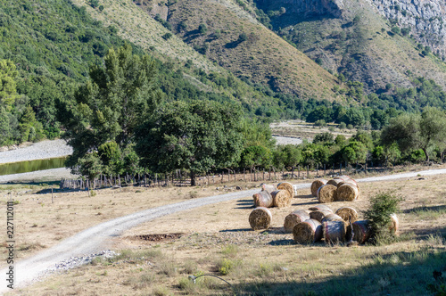 Tuinposter Khaki Free farm animals on a river bed in Cilento