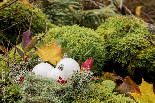 Three white Christmas decoration baubles in moss lichens nest outdoors in autumn. Preparing for Christmas holiday begins in autumn concept.