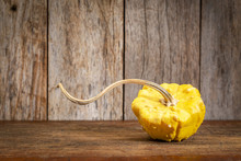 Ornamental Gourd On Rustic Wood