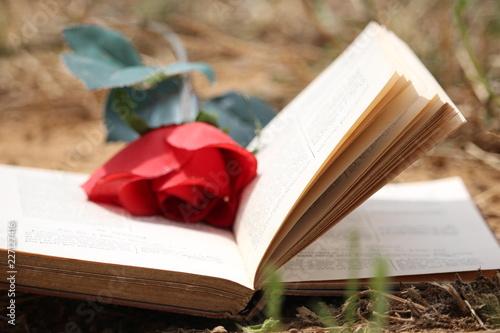 Livre De L Amour Roman A L Eau De Rose Buy This Stock