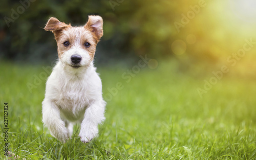 Deurstickers Hond Happy pet dog puppy running in the grass