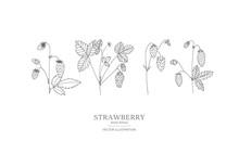 Hand Drawn Strawberry Set.