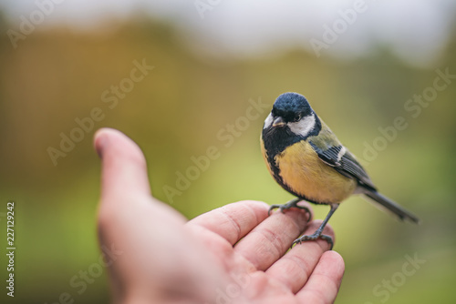 Little bird tit sitting on the outstretched palm