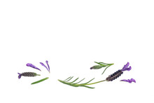 French Lavender Flowers And Leaves On White Background With Copy Space Above