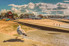 A Seagull With A Shadow Walk A...