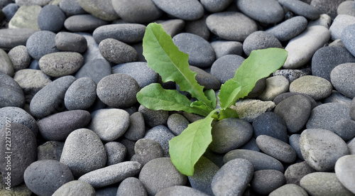 Photo Young green plant or tree with leaves growing out of dry barren stones background