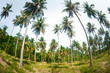 High coconut palm trees in public park on tropical island