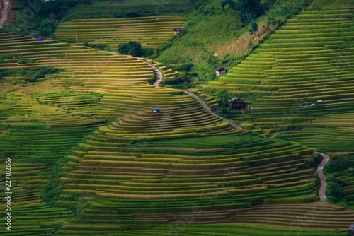 Fotobehang Rijstvelden Mu Cang Chai terraces rice fields in harvest season