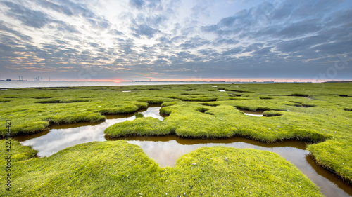Wall Murals Northern Europe Erosion holes in grassland of Tidal marsh of Dollard