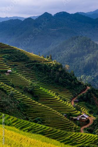 Foto op Aluminium Nachtblauw Mu Cang Chai terraces rice fields in harvest season