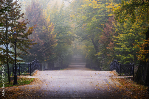 Foto op Canvas Herfst Golden shine autumn panorama scene in the park, the morning sun shining through the trees and fog.