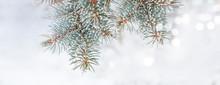 Frozen Branches Of Fir Tree. Horizontal Banner