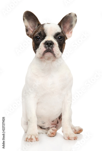 Foto op Plexiglas Franse bulldog French bulldog on white background