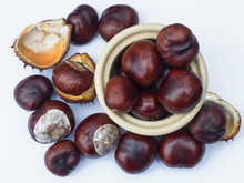 A Conker Collection. The Seeds Of The Horse Chestnut Tree ( Aesculus Hippocastanum ), They Are Attached To Strings For Use In A Traditional Child'ren's Game